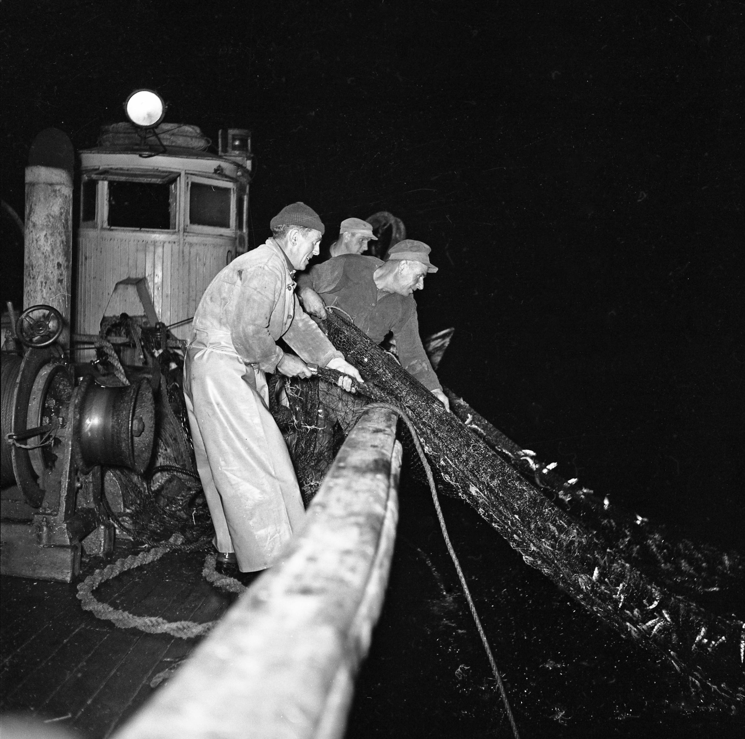 27 Fi 3035 - Remontée des filets par l'équipe de pêcheurs. Chacun s'active avec entrain. 19/08/1954