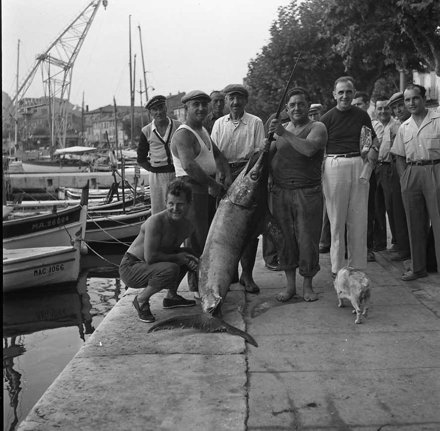 27 Fi 3933 - Pêche d'un énorme espadon par M.Castagnola. Poisson de 60 kilos parait-il. 28/08/1955