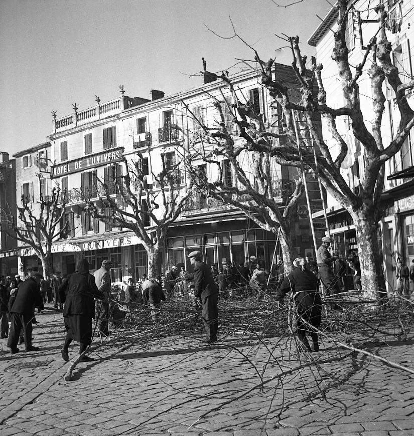 27 Fi 419 - « Tandis que les émondeurs taillent les arbres, des Ciotadens ramassent le bois pour leur feu ». (Le Provençal) 26/01/1953