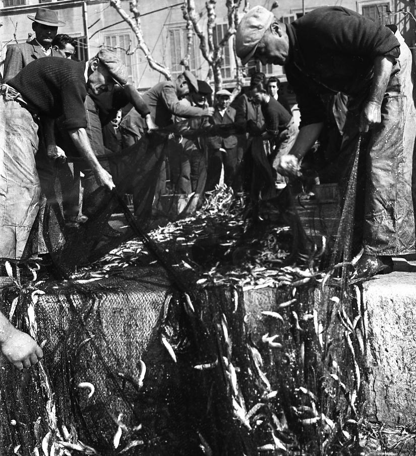 27 Fi 577 « Sous le regard émerveillé des promeneurs, les pêcheurs démaillent à terre, tant la pêche a été abondante. Les poissons aux écailles argentées sont mis dans les caissettes et dirigés sur les marchés ». (Le Provençal) 28/02/1953