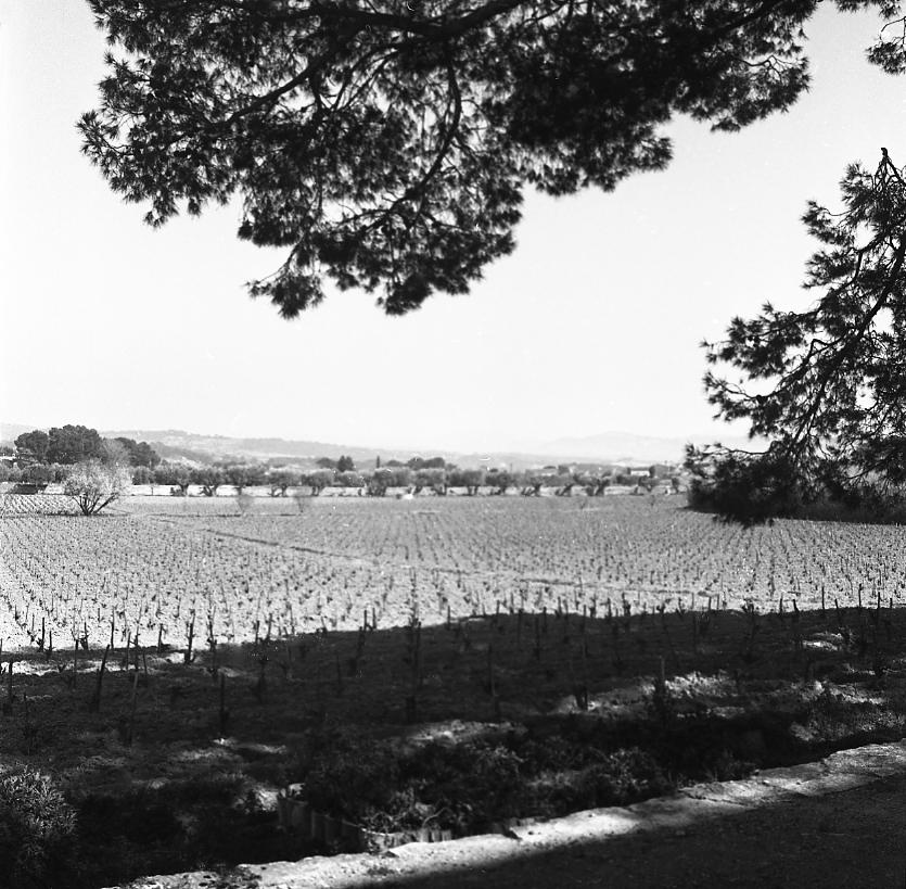 27 Fi 604 Magnifiques jardins et bâtisse du Domaine de la Tour, grand domaine viticole séculaire. 10/03/1953